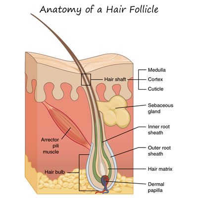 Patients' Guide to Pre-Operative Hair Removal for Phalloplasty